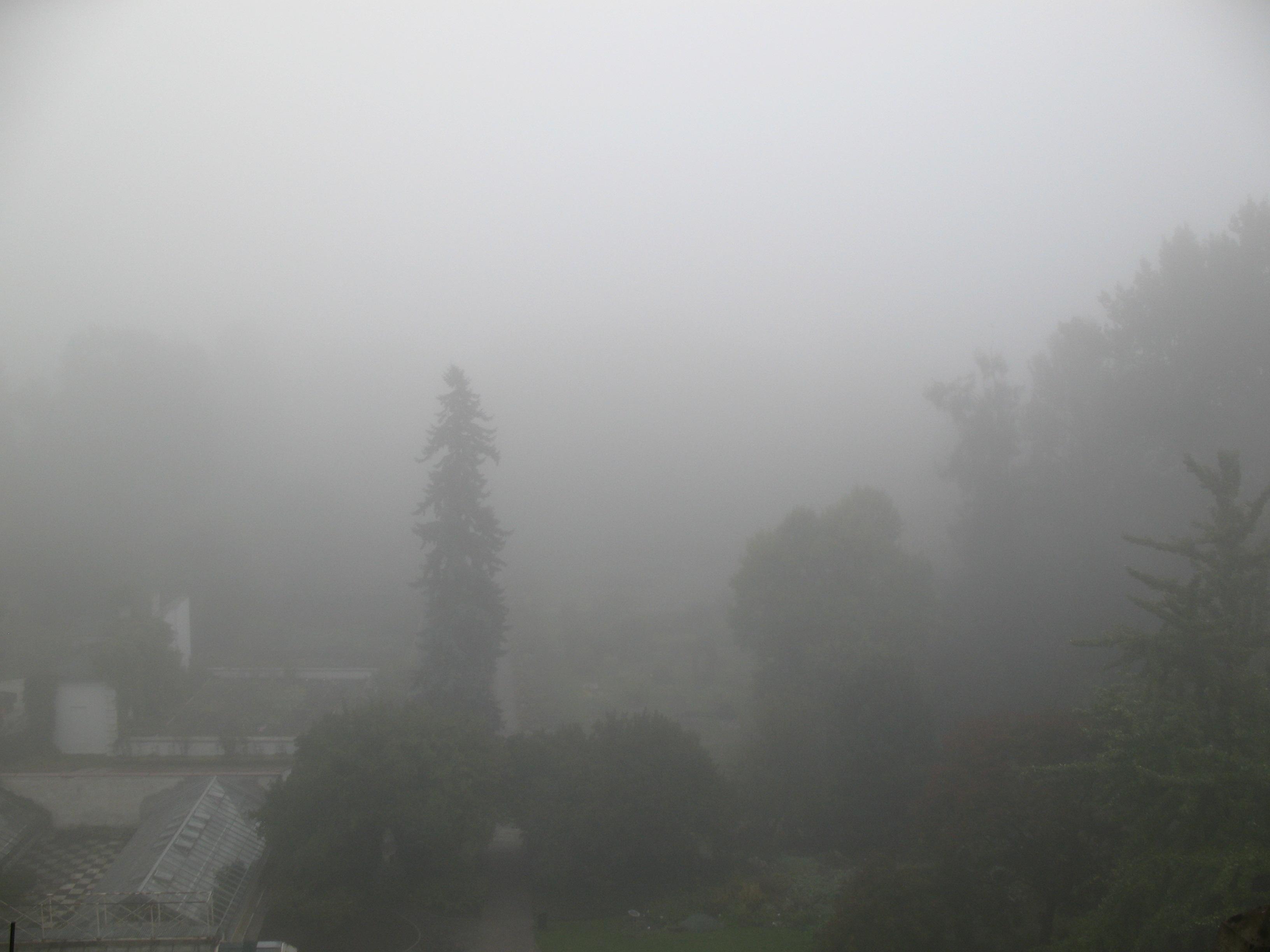 Mgła ograniczająca widzialność poziomą do 200 metrów (Kraków, Stacja Naukowa Zakładu Klimatologii UJ, fot. S. Wypych)
